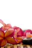 Frangipani and polished stone Stock Photo