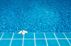 Frangipani on pool Stock Images