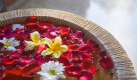 Frangipani at a resort spa Royalty Free Stock Photo