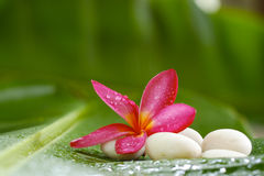 Frangipani and Rock on banana leaf for spa room Royalty Free Stock Photography