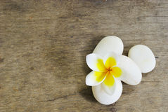 Frangipani and Rock on wood for spa room Royalty Free Stock Photo