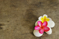 Frangipani and Rock on wood for spa room Royalty Free Stock Images