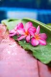 Frangipani rose près de l'espace de copie de piscine Photos libres de droits