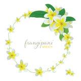Frangipani Round Wreath Royalty Free Stock Photo