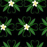 Frangipani seamless pattern Stock Images