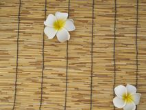 Frangipani set on bamboo table. White frangipani flowers placed on bamboo background, top view, space for text royalty free stock image