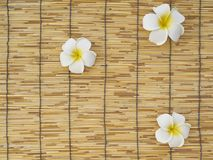 Frangipani set on bamboo table. White frangipani flowers placed on bamboo background, top view, space for text stock photos