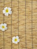 Frangipani set on bamboo table. White frangipani flowers placed on bamboo background, top view, space for text stock images