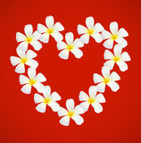 Frangipani shape as heart Stock Photo