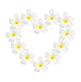 Frangipani shape as heart isolated Royalty Free Stock Photography