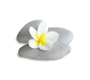 Frangipani spa Stock Photo