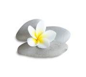 frangipani spa στοκ εικόνες
