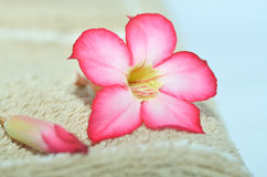 Frangipani and Spa Royalty Free Stock Photo