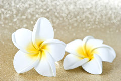 Frangipani spa flowers Stock Photos