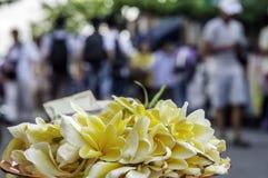 Frangipani Spa Flowers Stock Photo