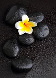 Frangipani with spa stones Royalty Free Stock Image