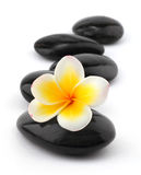 Frangipani with spa stones Stock Images