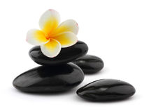 Frangipani with spa stones. On white background Stock Photography