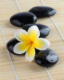 Frangipani with spa stones Stock Photos