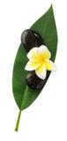 Frangipani,spa stones,leaf Royalty Free Stock Photography