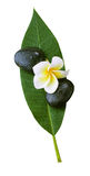 Frangipani,spa stones,leaf Stock Images