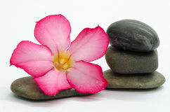 Frangipani and stones Stock Photo