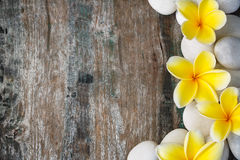 Frangipani and stones. Frangipani flowers and stones on wood background royalty free stock photo