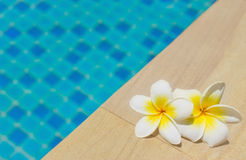 Frangipani by a swimming pool Royalty Free Stock Photos