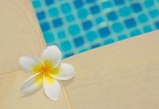 Frangipani by a swimming pool Royalty Free Stock Photos
