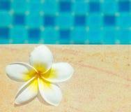 Frangipani by a swimming pool Stock Photo