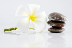 Frangipani on therapy stones Stock Image