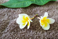 Frangipani and towel Stock Photos