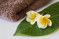 Frangipani and towel Stock Image