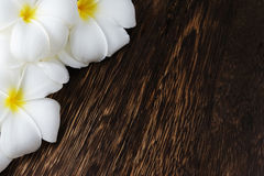 Frangipani tropical flowers border Stock Photography