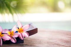 Frangipani tropical spa flower Royalty Free Stock Photo