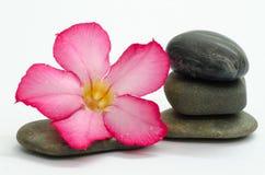 Frangipani und Steine Stockfoto