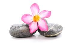 Frangipani und Zen Stone lizenzfreie stockfotografie