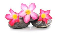 Frangipani und Zen Stone lizenzfreie stockfotos