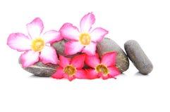Frangipani und Zen Stone lizenzfreies stockbild