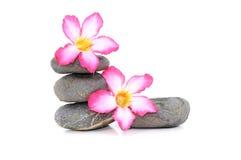 Frangipani und Zen Stone lizenzfreie stockbilder