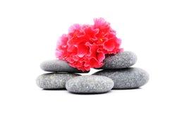 Frangipani und Zen Stone stockfotografie