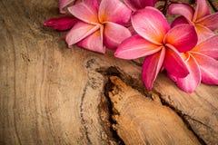 Frangipani vermelho colocado em um assoalho de madeira Imagem de Stock