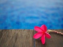 Frangipani vermelho & x28; plumeria& x29; floresce a árvore de pagode na piscina Fotografia de Stock