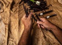 Frangipani von moorea Insel lizenzfreies stockbild