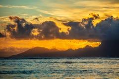 Frangipani von moorea Insel stockfotos