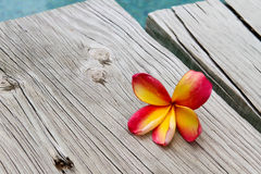 Frangipani on Wood Royalty Free Stock Images