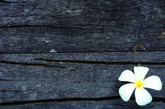 Frangipani on wood Stock Images
