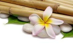 Frangipani y bambú Imagen de archivo