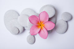 Frangipani Zen. Pink frangipani flower and white pebbles. High key zen stock photo
