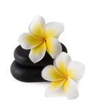 Frangipani on zen pebbles. Frangipani flowers on zen pebbles isolated on white stock photo
